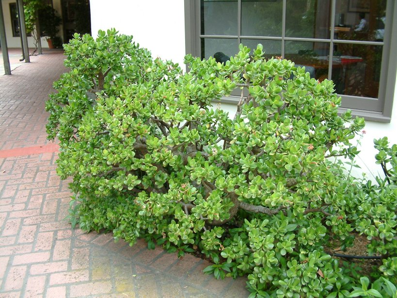 Low maintenance shrubs for Small low maintenance plants